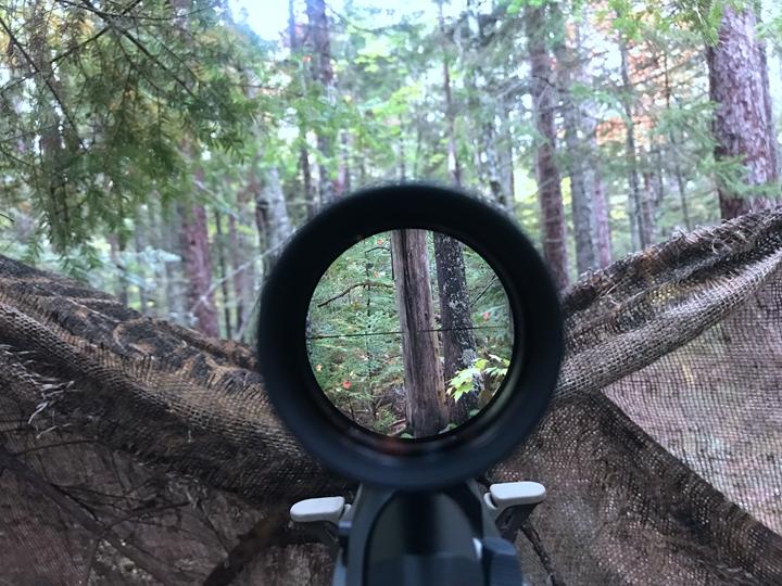 黑熊狩猎 狩猎方式 北美狩猎 北美黑熊 国外狩猎 国外猎人