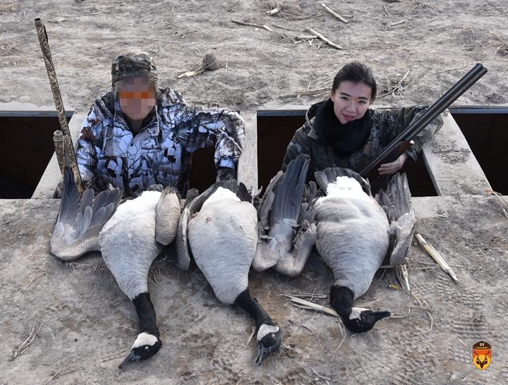 美国大雁狩猎团 加拿大雁狩猎