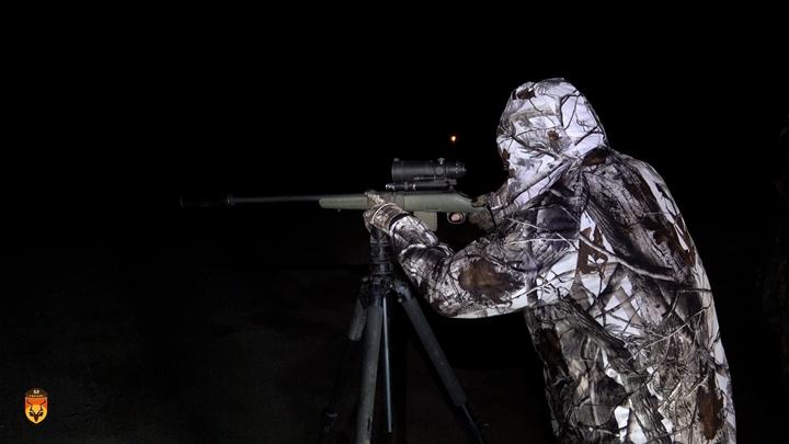 郊狼晚上狩猎