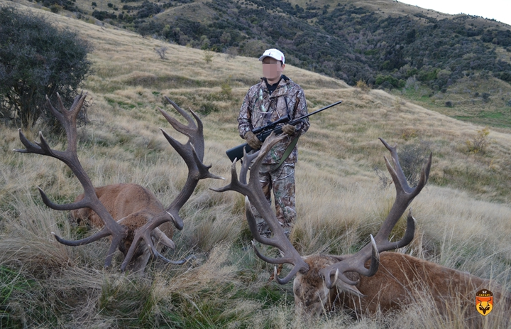 新西兰赤鹿狩猎