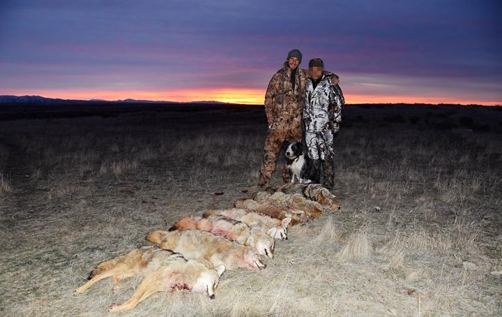 美国郊狼狩猎