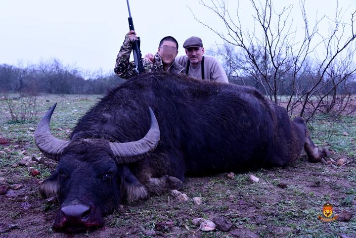 亚洲水牛狩猎