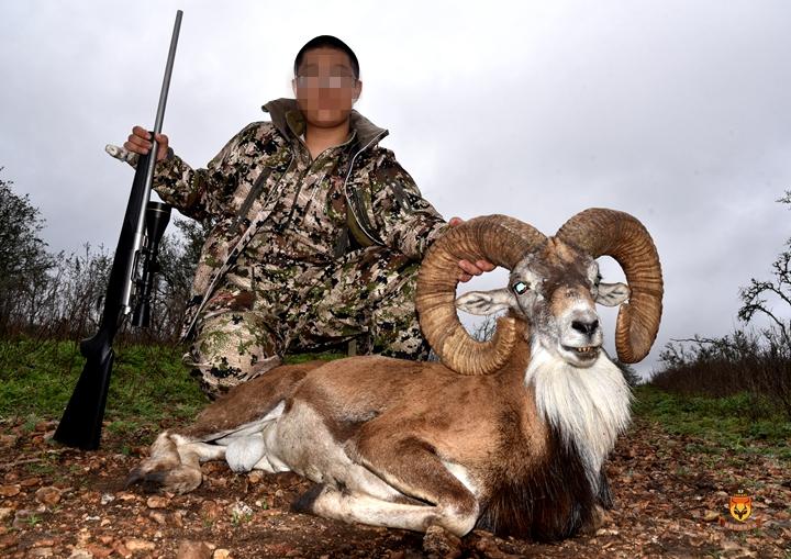 东方盘羊狩猎 国际狩猎 美国狩猎 北美狩猎
