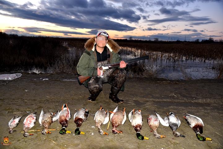 鸭子狩猎团 美国狩猎团 飞禽狩猎团