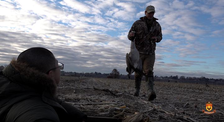 加拿大大雁狩猎收获