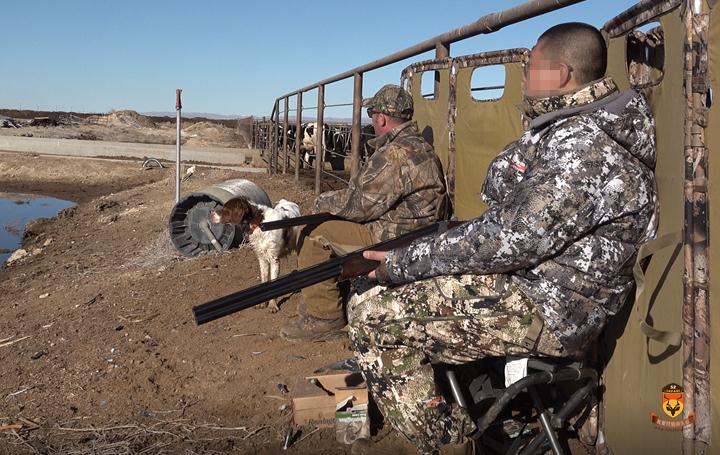 美国野鸽子狩猎