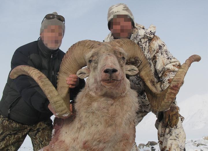 盘羊狩猎团