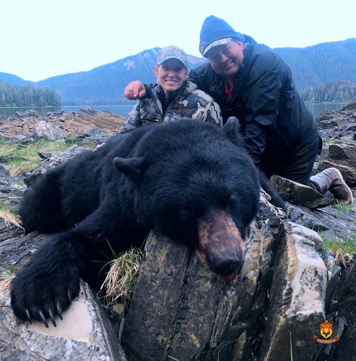 阿拉斯加海边巨大黑熊狩猎