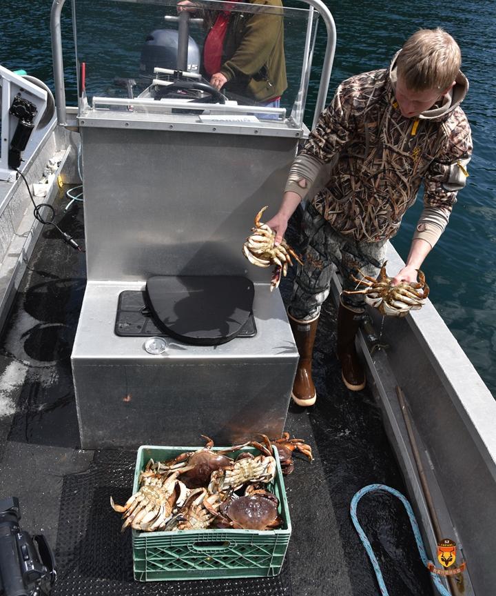 阿拉斯加抓螃蟹