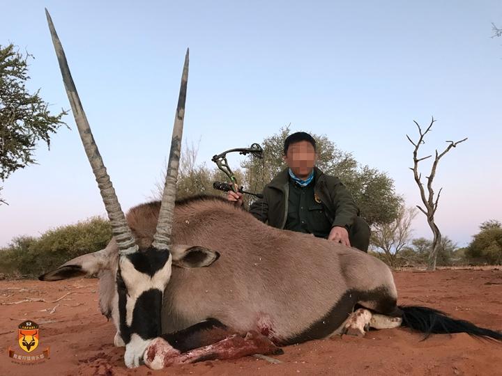 剑羚狩猎 直角羚狩猎
