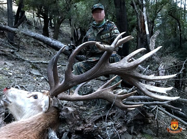 新西兰巨大赤鹿狩猎