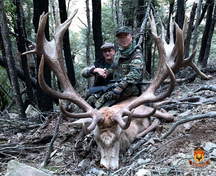 新西兰鹿战利品