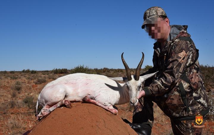 白跳羚狩猎