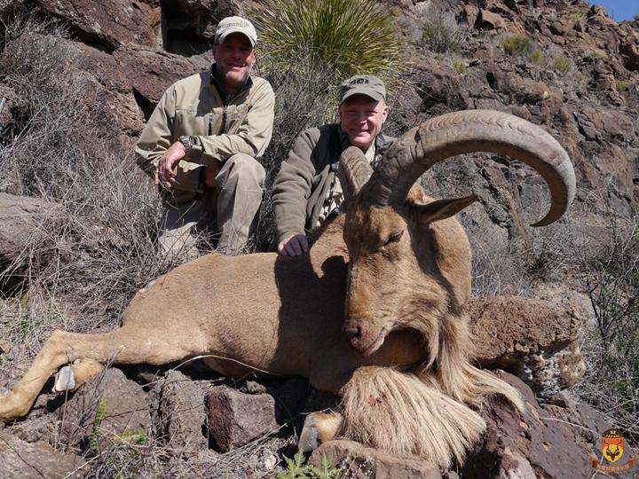 北美狩猎 美国狩猎 国外狩猎 巴巴里蛮羊狩猎