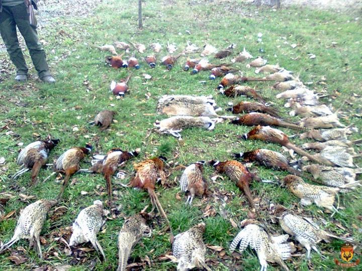 塞尔维亚狩猎 欧洲狩猎 野鸡狩猎 兔子狩猎
