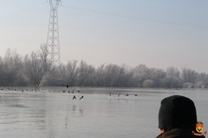 塞尔维亚狩猎 国外狩猎 欧洲狩猎 绿头鸭狩猎 野鸭狩猎