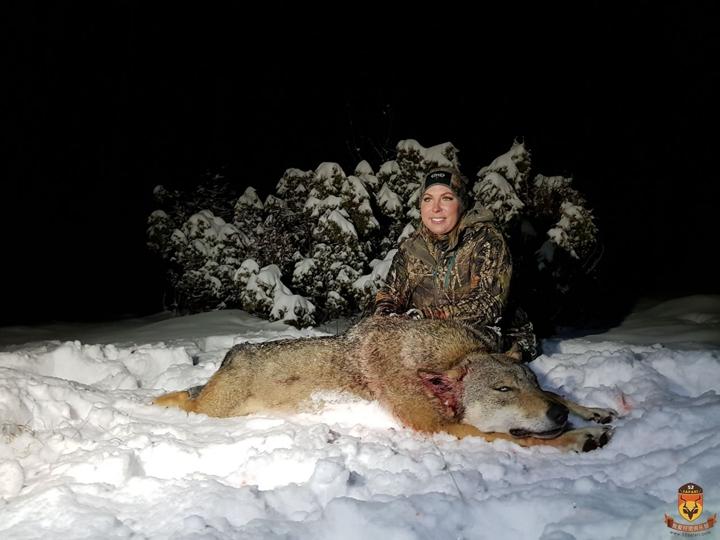 塞尔维亚狩猎 国外狩猎 欧洲狩猎 大灰狼狩猎