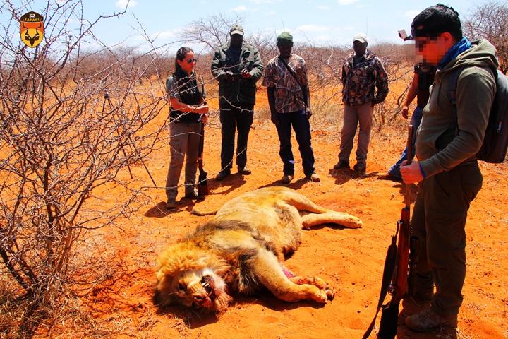 南非狮子狩猎团