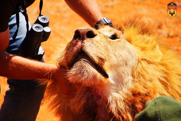 中国人南非狩猎