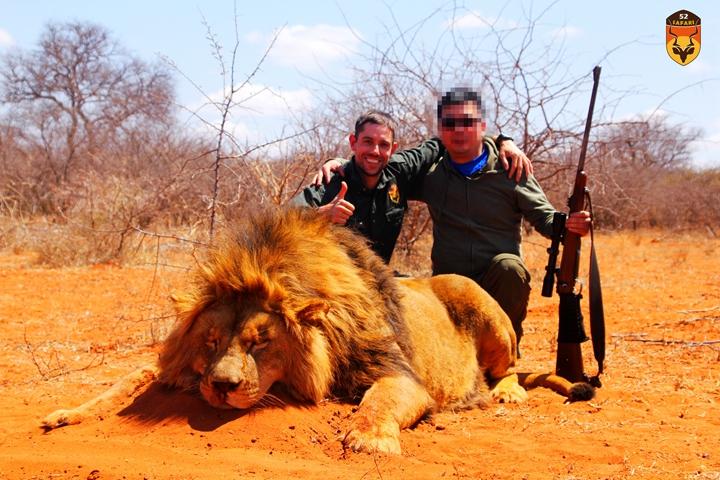 非洲雄狮狩猎