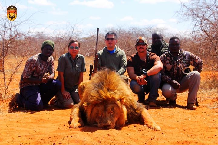 雄狮战利品狩猎