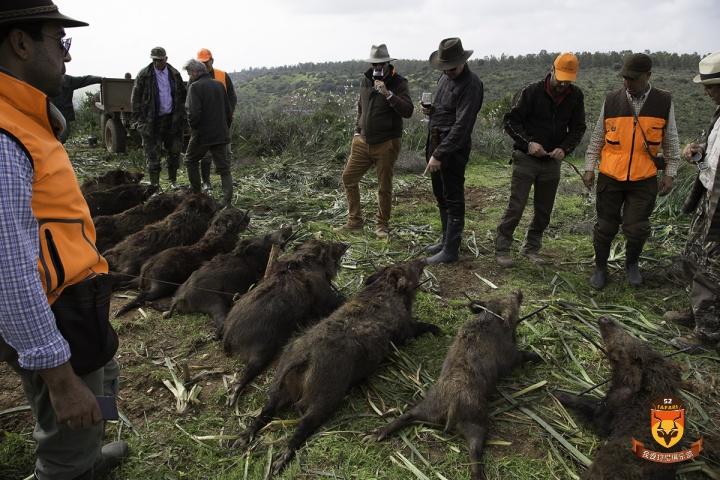 摩洛哥野猪狩猎