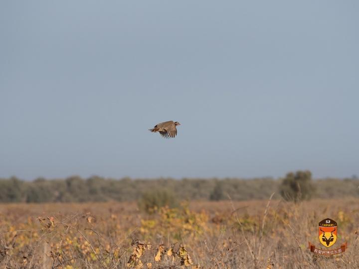 摩洛哥飞禽狩猎