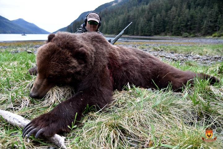 阿拉斯加棕熊狩猎团