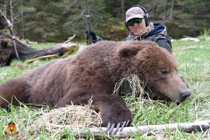 阿拉斯加海岸棕熊狩猎