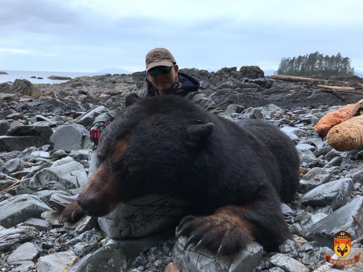 阿拉斯加黑熊狩猎