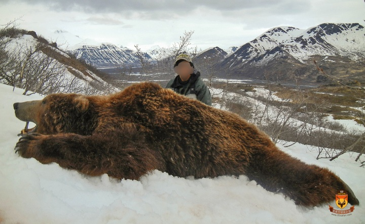 阿拉斯加半岛棕熊狩猎