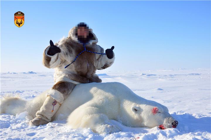合法北极熊狩猎