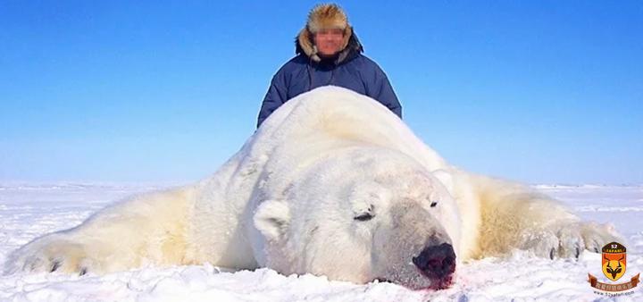 加拿大北极熊狩猎团