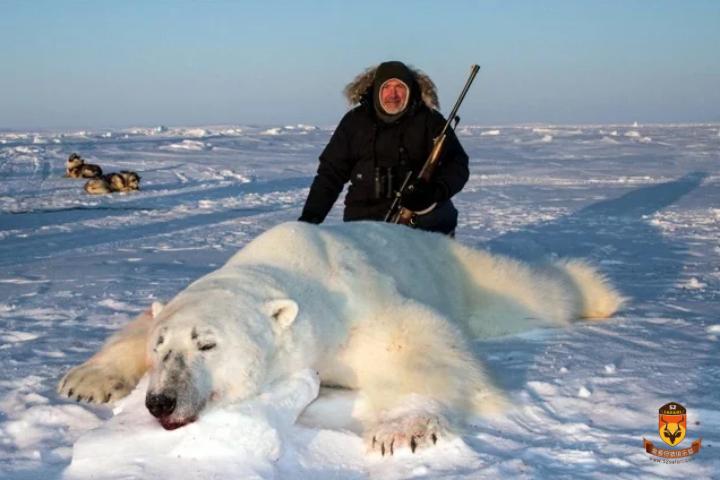 能打北极熊吗