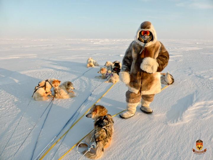 猎犬北极熊狩猎