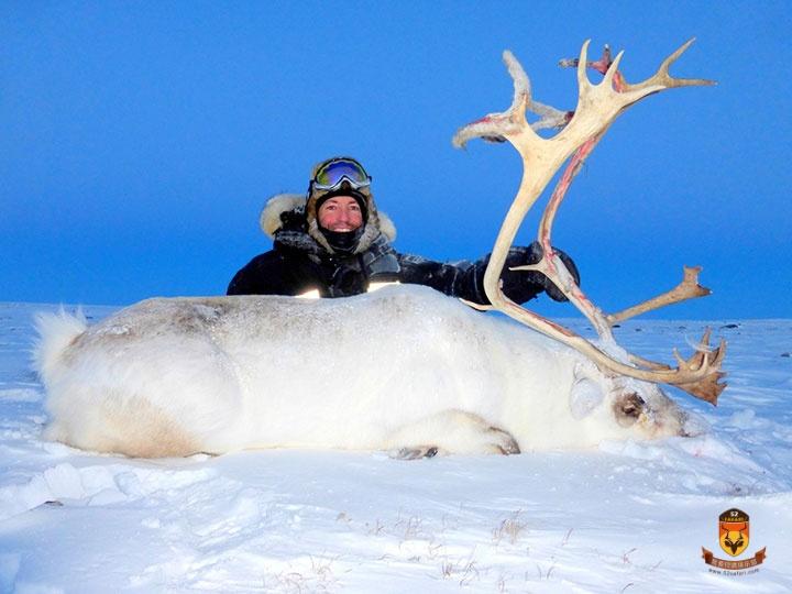 北极驯鹿狩猎