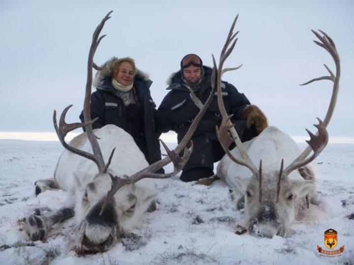 加拿大驯鹿狩猎
