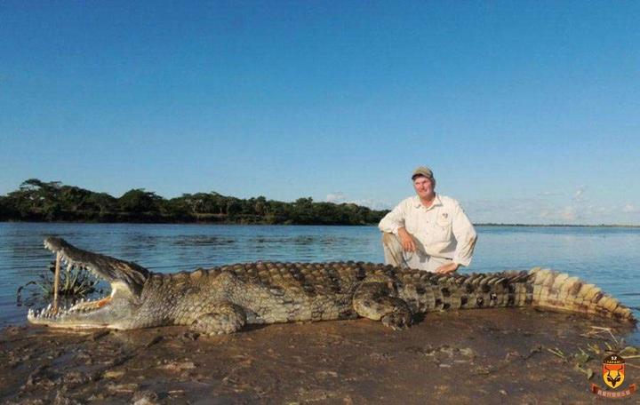 莫桑比克狩猎 尼罗鳄狩猎