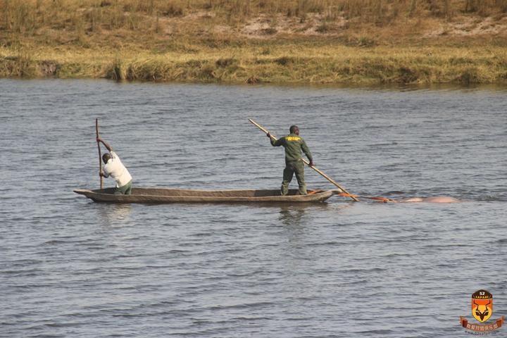 河马狩猎 莫桑比克狩猎 尼罗鳄狩猎