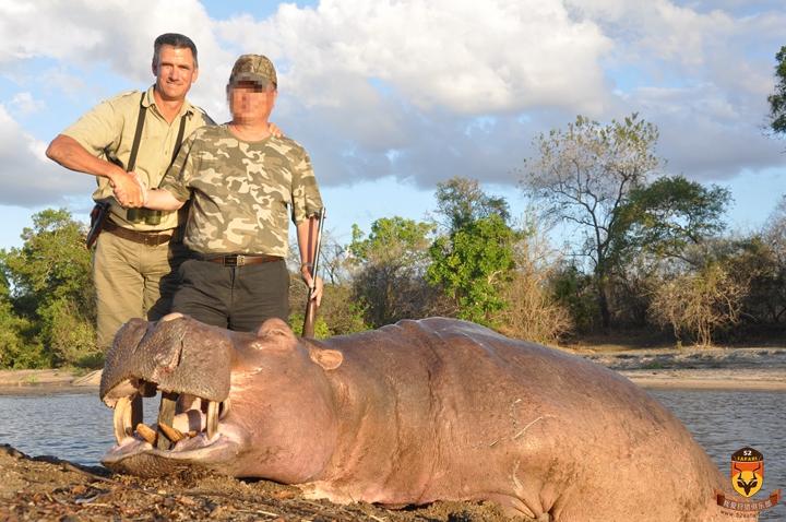 河马狩猎 莫桑比克狩猎