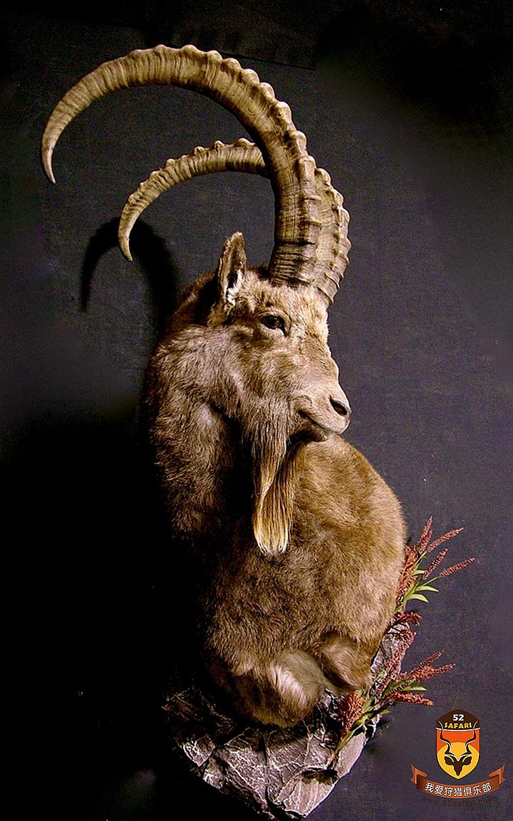喜马拉雅北山羊狩猎