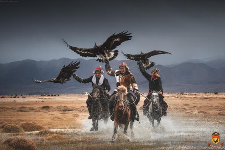 蒙古雕狩猎