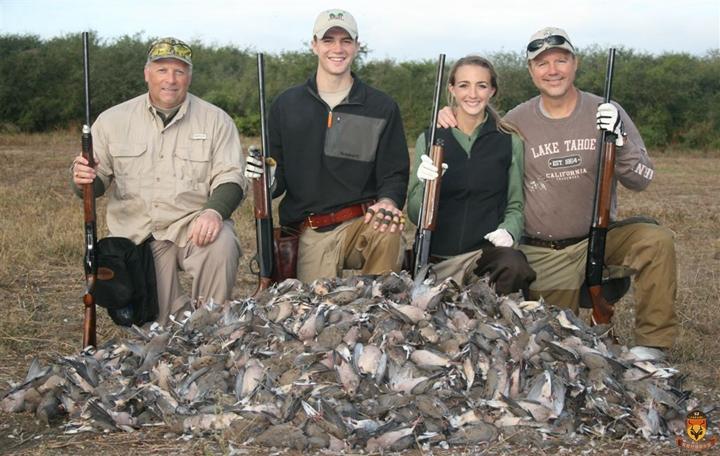 墨西哥斑鸠打猎