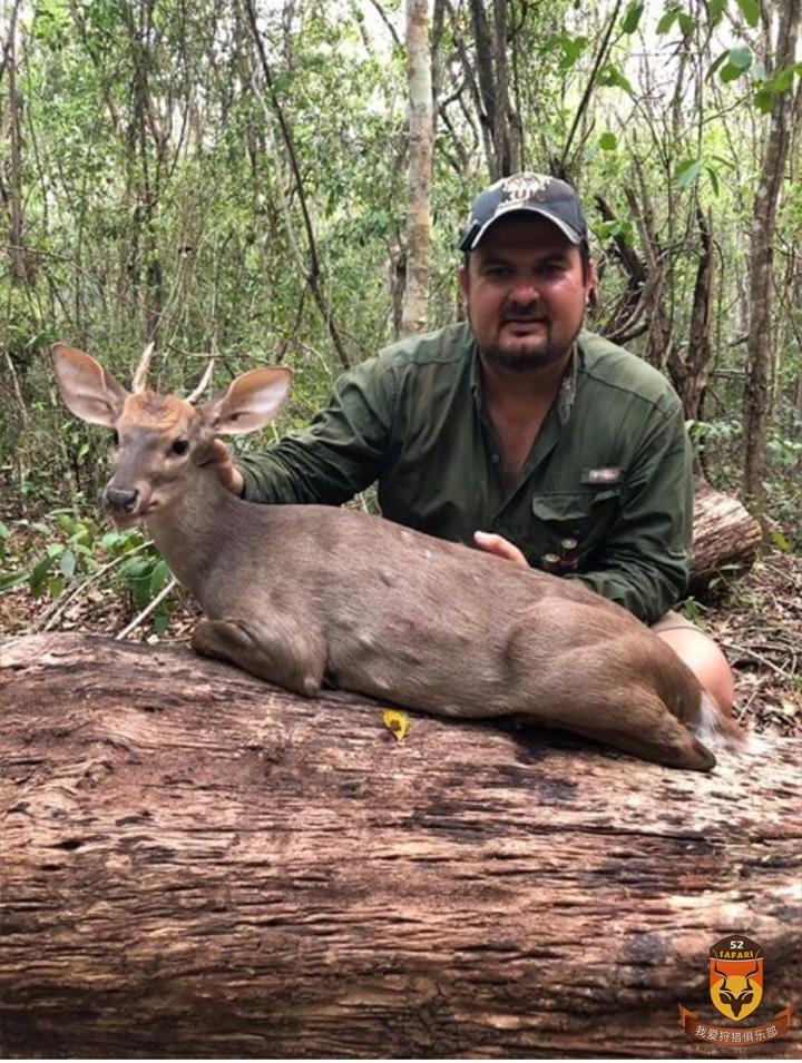墨西哥丛林鹿狩猎