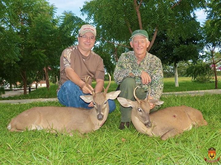 白尾鹿狩猎团